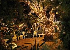 I love lighted trees. These + rural wedding reception would be so amazing. I'd probably be THAT GUY sitting in the corner mesmerized.