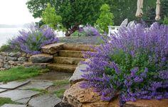 McCullough's Landscape  Nursery ( Perennial Gardens )