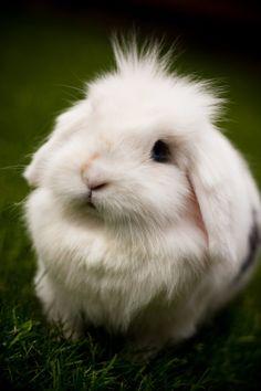 Snowyyy Rabbit by *BWozniakPhotography on deviantART