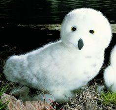"""Wanda"" Snowy Owl"