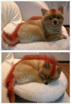 Chinese Pet Owners Dye Their Pets to Look Like Wild Animals. love!  -OPAWZ