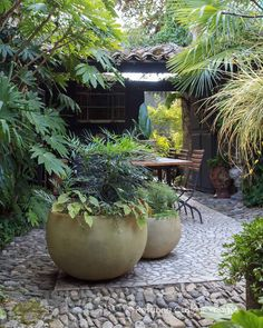 Two well chosen pots planted up to compliment the surrounding plants creates harmony Small City Garden, Garden Spaces, Small Gardens, Dream Garden, Garden Pots, Outdoor Gardens, Tropical Garden Design, Tropical Landscaping, Backyard Landscaping