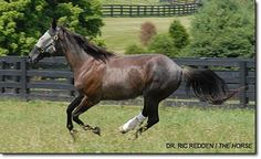 Supporting Limb Laminitis: Learning How to Save Horses Such As Barbaro