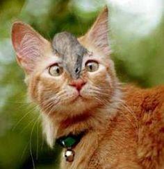 lustiges Bild 'Zähne sind im Glas.jpg'- Eine von 23344 Dateien in der Kategorie 'witzige Bilder' auf FUNPOT.