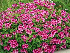 Specializing in rare and unusual annual and perennial plants, including cottage garden heirlooms and hard to find California native wildflowers. Types Of Flowers, Types Of Plants, Love Flowers, White Flowers, Beautiful Flowers, Flower Seeds, Flower Pots, Annual Flowers, Flowers Perennials