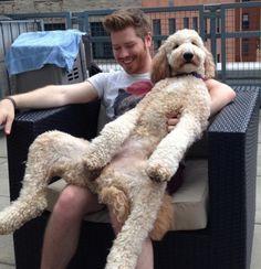 lovehumansdog