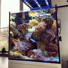 Mixed 21 gallon nano reef tank Aquarium
