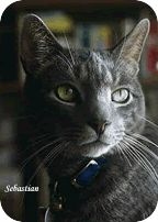 Feline Asthma Triggers --It is important to try and identify the allergen causing your cat's reaction. This search can be frustrating because the allergen may be one or a combination of many things, including pollens, mold & mildew, smoke, household products, cat litter, dust & dust mites, vaccines, stress, exercise, cold & dry air and food.