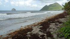 Point sargasses au Diamant en Martinique, le 04/06/18 - Images du jour et des autres jours: https://madikeravoyages.fr/crbst_549.html  A 9h30, il y a qqs arrivantes mais rien de massif. Espérons...  Par contre tout au long de la côte atlantique ce sont des mégas radeaux qui arrivent et se déposent de Sainte-Anne au Marigot, en passant par Tartane...