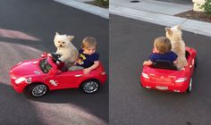 Check This Cute Video Of Dog Driving A Toddler Around In Toy Car