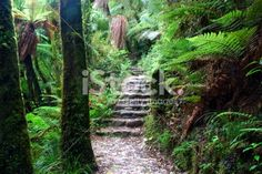 Lost World Royalty Free Stock Photo What Image, Image Now, Images Of Peace, Deep Photos, Abel Tasman National Park, New Zealand Landscape, Forest Bathing, World Photo, Turquoise Water