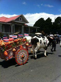 Desfile de boyeros y carretas típicas. Costa Rica, Pura Vida