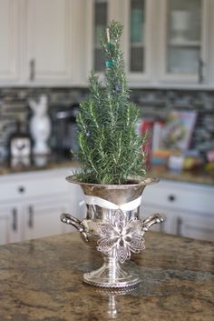 Silver #champagne chiller found at #Goodwill filled with a small #rosemary tree for the #holiday season. #repurpose #thrift #donate