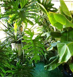 September gardening tips: planting bulbs, planting trees--plus, houseplant savvy