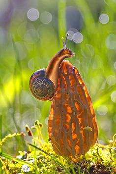 Photograph Little snail by Elena Solovieva on 500px