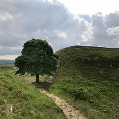 Sycamore Gap, Northumberland Sycamore Gap, Country Roads, England, Explore, Instagram, English, British, United Kingdom, Exploring