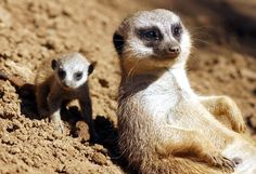 """Sometimes, we just chillax, because it's hard to be so 'on' all the time."" 