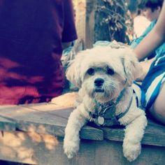 "@jackiecous's photo: ""#shortymerlin #dogsofinstagram"" (At a house warming BBQ)"