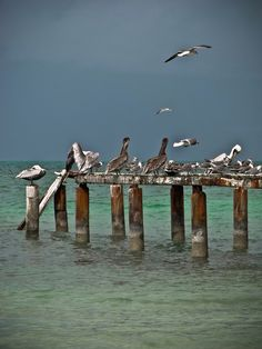 #SanBlas Photography, Animals, Projects, Santos, Boat Dock, Cities, Lady, Places, Fotografie