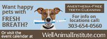 Understanding Dog Hormone Deficiencies | Animal Wellness Magazine