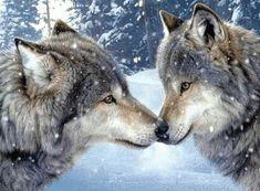 loups mignons et affectueux dans la neige #loups