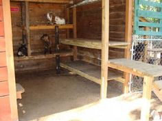 How to build a goat house. Practice homesteading with goats, and build a goat shelter with these goat house ideas. Keeping Goats, Raising Goats, Miniature Goats, Miniature Cattle, Goat Playground, Goats For Sale, Goat Shed, Goat Shelter, Goat House