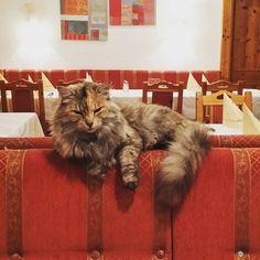 #stayhungry  #cat am #zistelberghof
