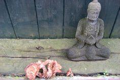Our Buddha.