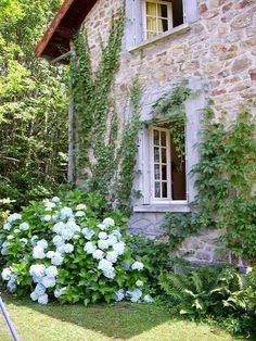 stone house, hydrangea