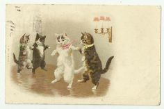 Cats ballroom dancing. Another in this series is included on this board. Helena Maguire.