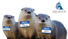 Follow the otter bro