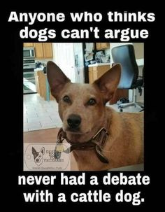 Debate with a cattle dog