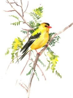 American Goldfinch Artwork bird art original watercolor one of a kind painting, yellow green wall art, watercolor art, goldfinch birds bird by ORIGINALONLY on Etsy