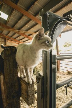 Barn Kitty | Flickr