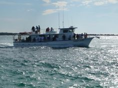 The main aim of Miami charter boat is to give a great sport fishing trip in Miami. See more at http://www.miamicharterboat.com/fishing/index.htm #fishingcharterboatMiami, #Miamibaysidecharterboat, #MiamiBeachcharterboat,