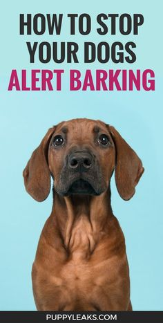 Does your dog bark out the window all the time? Here's how to stop your dog from barking. One simple trick to stop stop alert barking in your dog.