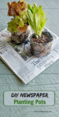 These DIY newspaper seed pots are an organic way to start your seeds. Garden Paths, Herb Garden, Organic Gardening, Gardening Tips, Vegetable Gardening, Paper Pot, Organic Seeds, Edible Garden, Growing Plants
