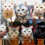 How to store & organize cats | taildom