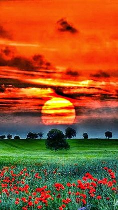 Beautiful sunset over a lush green field Amazing Sunsets, Amazing Nature, Amazing Places, Beautiful World, Beautiful Images, Stunningly Beautiful, Nature Pictures, Cool Pictures, Amazing Photos