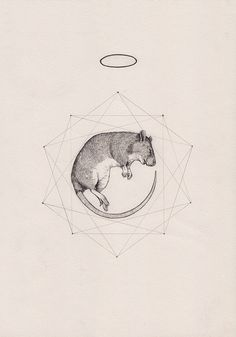Rat prism - Peter Carrington #rat #mouse #symbols #halo #drawing #illustration