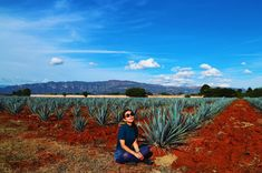 Wow I wanted to stay there more!! #mexico #tequila #alcohol  #travel #travelblogger #blogger #beautiful #love #culture #adventure #travellikedance #gopro  #sponsorship #nature #メキシコ#テキーラ #sns