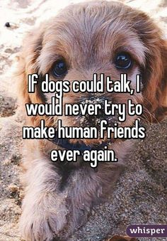 If dogs could talk I would never try to make human friends again.