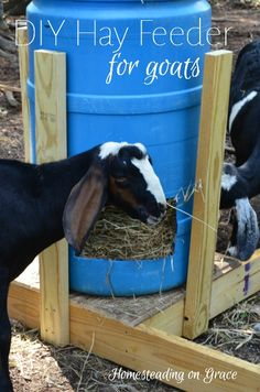 A quick and easy DIY goat hay feeder for little to no money.