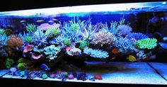 Live Aquarium Plants are Key Element of Style : Freshwater Aquarium Setup With Live Plants. Freshwater aquarium setup with live plants. Aquarium Design, Saltwater Aquarium Setup, Coral Reef Aquarium, Saltwater Fish Tanks, Tropical Fish Tanks, Marine Aquarium, Aquarium Fish Tank, Tropical Aquarium, Modern Fish Tank