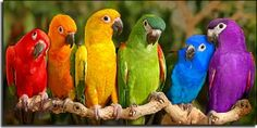 Parrots are found in a resplendent variety of intense jewel tones.  If you want to own one, be aware they are noisy and need special diets and health care.