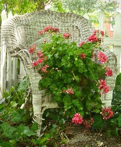 an old wicker chair may be too rickety to support a person, but it can easily hold a pot of flowers. an old wicker chair may be too rickety to support a person, but it can easily hold a pot of flowers. Old Wicker Chairs, Wicker Furniture, Wicker Table, Wicker Dresser, Wicker Trunk, Wicker Mirror, Wicker Shelf, Wicker Baskets, Painted Furniture