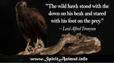 """Inspirational Hawk Quotes """"Anyone who has ever stopped to watch a hawk in flight will know that this is one of the natural world's most elegant phenomena. Hawk Spirit Animal, Find Your Spirit Animal, Animal Spirit Guides, Bald Eagle, Quotes, Animals, Facebook, Twitter, Google"""