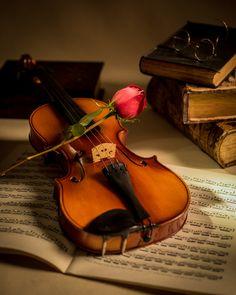 Fotó hegedű és a Red Rose William Doree on 500px