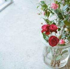 rose and camellia by I.E., via Flickr