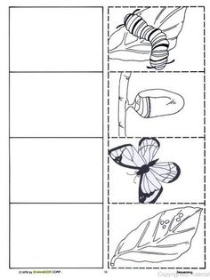 Science Worksheets Kindergarten Life Cycles 29 New Ideas Science Worksheets, Worksheets For Kids, Kindergarten Science, Kindergarten Worksheets, Chenille Affamée, Butterfly Metamorphosis, Butterfly Life Cycle, Butterfly Art, Butterflies